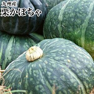 北の大地からお買得!!南瓜 約10K箱【5〜7玉】ホクホクのかぼちゃ!