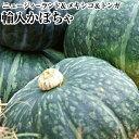 輸入かぼちゃお試し 大玉3玉ホクホクのかぼちゃ!