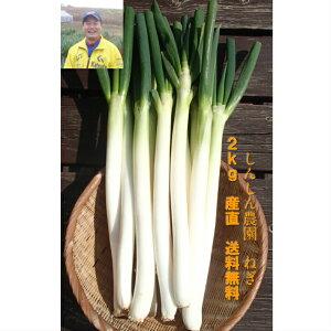 エコファーマー認定 減農薬 安全 茨城県 ひたちなか市 国産 産直  野菜 青み 白ネギ シロネギ 白葱 長ネギ 長ネギ 長葱 ネギ ねぎ 葱 お試し2kg 送料無料