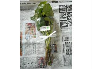 エコファーマー認定 茨城県 ひたちなか市 国産 産直 サツマイモ さつまいも 薩摩芋 紅あずま 紅東 苗 10本 送料無料