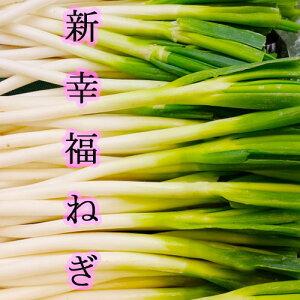 【 新幸福 ねぎ 】 5kg 長野県産 白ネギ 長ネギ  <送料無料 ※一部地域加算 >