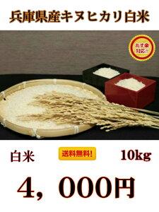 絶対お得!【令和元年産】兵庫県産 キヌヒカリ 白米 10kg 送料無料!一部の地域を除くキヌヒカリの特徴は、その輝きの素晴らしさと、食味の良さといわれています。【お米屋しんちゃん】
