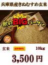 新米絶対お得!【R2年産】送料無料!一部の地域を除く、兵庫県産 きぬむすめ玄米 10kg キヌムスメの味の特徴は、質感…