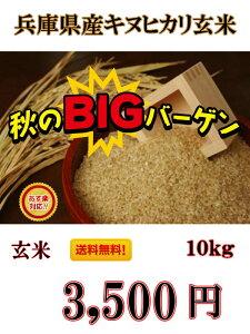 絶対お得!【R1年産】送料無料!一部の地域を除く、兵庫県産 キヌヒカリ 玄米 10kg キヌヒカリの特徴は、その輝きの素晴らしさと、食味の良さと言われています。【お米屋しんちゃん】