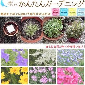 【ネコポス対応】花の種(花畑)全4色おうちでカンタン ガーデニング/フラワリーランド