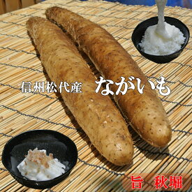 信州松代産長芋!山芋!食欲増進健康長いも!【味上品!10kgご家庭用長いも6〜8本】