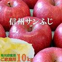 当店おすすめおいしい〜!信州サンふじりんご10kg!産地直送上品サンふじりんご