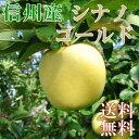 信州産りんご10キロ【シナノゴールド】ご家庭用 美味しい産地から直送!