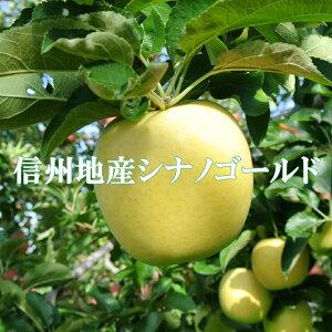 ご贈答に!信州りんご【シナノゴールド】秀品5kg!産地直送りんご