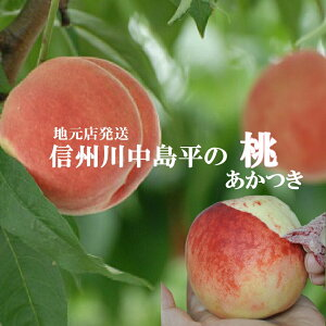 【2020予約受付中】信州の桃川中島平の桃【あかつき】朝摘み出荷5kg