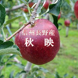 信州りんご【秋映りんご】秀品5kg!地元当店より産地直送!