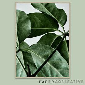 【PAPER COLLECTIVE】GREEN HOME 01/グリーンホーム01 50x70cm 08107ペーパーコレクティブ/Riikka Kantinkoski/葉/観葉植物/ポスター/北欧/インテリア コンビニ受取対応【RCP】