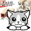 楽天市場 猫のはんこ 動物イラストはんこ しっぽと生活