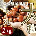 【秋だけの限定】愛媛県城川産の大粒生栗[3Lサイズ2kg入]