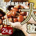 【秋だけの限定】愛媛県城川町産の最大級生栗[4Lサイズ2kg入]大きさにビックリ