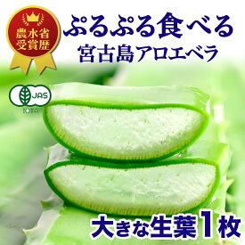 【食用】アロエベラ 生葉 沖縄 宮古島産 大きな生葉1枚 お試し800g