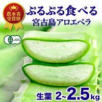 沖縄宮古島産無農薬アロエベラアロエ生葉3kg