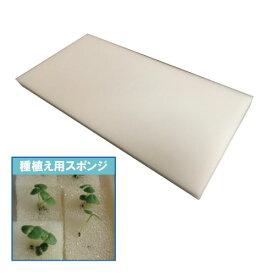 水耕栽培 植物栽培スポンジ 培地×1枚(23.5mm角が 300ピース入り)
