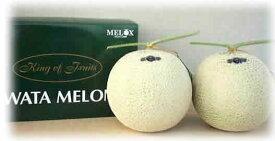 静岡・磐田 マスクメロン 2個(各約1.3kg)低農薬栽培・肥料はカテキン、キトサン、薬使わず土壌熱風消毒。ご贈答に最適