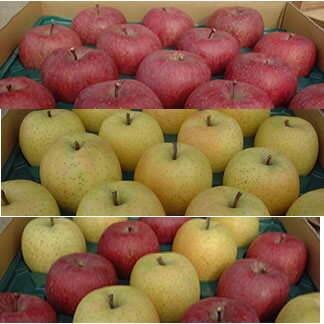 まるかじりできる津軽岩木山のリンゴ! 徹底減農薬 無袋栽培 サンふじ・王林(一級品)10kg【発送時期11月中旬頃〜2月上旬頃】