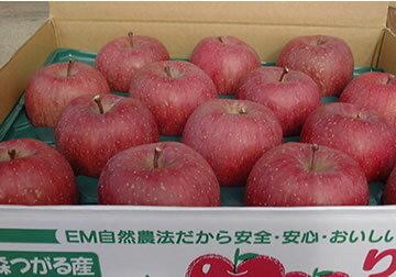 まるかじりできる津軽岩木山のリンゴ! 徹底減農薬、無袋栽培 サンふじ・王林(ご贈答用)5kg 【発送時期:11月中旬頃〜12月下旬頃】