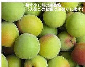 うめ 梅 なんこううめ 青梅 梅干し 梅酒 梅シロップ 奈良県 西吉野の減農薬、堆肥栽培の梅 約10kg【発送6月中旬 〜 7月上旬】※2019年は青南高梅は6/19で、南高梅は6/25で販売終了予定です。梅酒用青梅・南高梅を選べる6/27〜7/2はG20で指定日不可です。