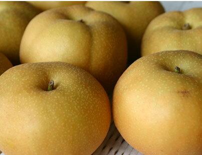 梨 長野県 夜間瀬 産地直送 低農薬 有機肥料栽培 新品種の高級梨(南水)約3kg(約10〜11個)【発送時期:10月中旬頃〜12月下旬頃】