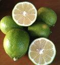 【送料無料】樹の上に格上のレモンあり。化学農薬/化学肥料/除草剤/防腐剤など一切不使用瀬戸田の有機肥料栽培グリー…