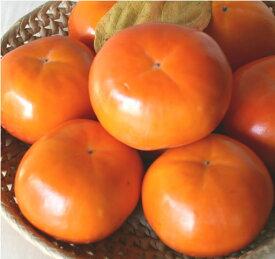 産地直送 有機質肥料 低農薬 奈良県 西吉野 富有柿(贈答用)2Lサイズ 12個【発送:10月下旬頃〜12月上旬頃】05P13Dec14 たっぷりの天然ミネラルとにがり、吉野の気候風土が、ふるさとを思い出す味を柿に与えた。