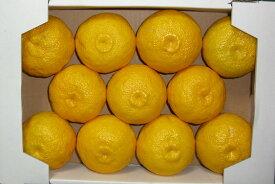 無農薬 ゆず 柚子 産地直送 高知県産 気品ある香り、鮮やかな黄色 そのまま食べたくなるような最高品質・高知物部の農薬不使用 ゆず 約1.5kg【発送 11月中旬〜12月下旬】自然堂本舗