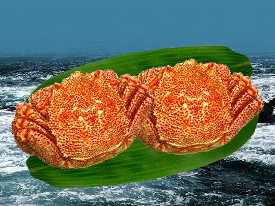 【送料無料】 毛ガニの旬は春!まるまる太ったとれたて根室産 特撰春毛ガニ 2匹 (500g×2)【発送 3月上旬 〜 5月下旬】【smtb-T】