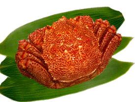 身がぎっしり、カニ味噌が絶品大きなサイズの毛ガニ(ボイル)1匹(約550g)