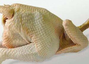天草地鶏・天草大王 メス 中抜き丸 (約2.5kg)※ご注文後処理、産地直送の鮮度 鶏肉 丸鶏 手作り クリスマス ローストチキン 国産 高級