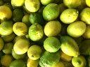 予約 元祖 瀬戸田 能勢さんの有機肥料栽培 わけありレモン約3kg(約30個前後)化学農薬 化学肥料 除草剤 殺虫剤 防腐…