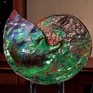 化石 原石 『 史上最高色 アンモライト 』 カナダ アルバータ州 産 博物館級 オパール 宝石鑑別書付き 通販 販売