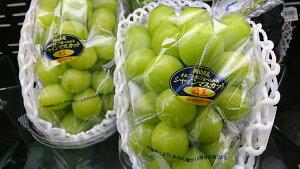 岡山県産 果皮ごと食べれて種なしです シャインマスカット「晴王」1箱2房 1.3kg化粧箱(特秀)