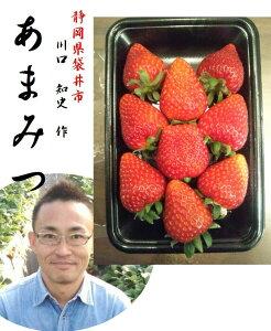 「世界で一つだけの苺!!」静岡県掛川市産 川口 知史 作 あまみつ苺(ご家庭用) 1箱2パック入り (1パックあたり 250g5〜12粒入り) ※大きさにより粒数が異なります。
