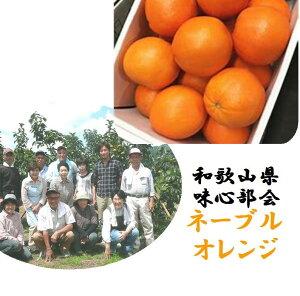 「産地直送!!」和歌山県紀の川市味心部会 ノーワックス ネーブルオレンジ 1箱2.5kg