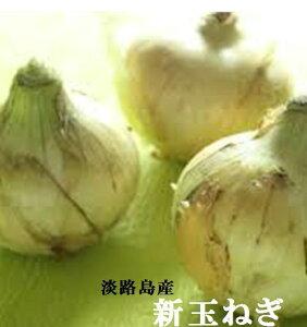 兵庫県淡路島産 今だけ 生でも美味しい「淡路の新玉ねぎ」L〜2L寸1箱(5kg)