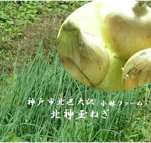 兵庫県神戸市北区大沢 小林ファーム 北神玉ねぎ 5kg(2L〜M寸混合)