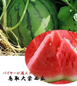 鳥取県産 バイヤーが選んだ大栄西瓜 1玉2L〜3L(1玉あたり6kg〜7kg)