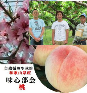 和歌山県紀の川市 味心部会 ち密な肉質と豊富な果汁・上品な味わいに「味心桃」1箱3kg(8〜12玉)