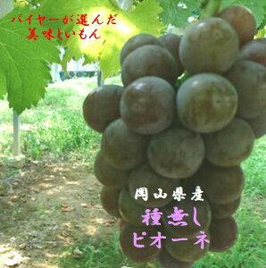 岡山県産 バイヤーが選んだ 「種無しピオーネ」進物用2房入り(1.2kg〜1.4kg入)