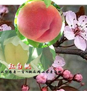 山梨県伝統の「一宮の桃」3玉&岡山県産 上品な甘みとち密な肉質と豊富な果汁 「岡山の白桃」3玉 1箱1.5kg