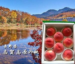 バイヤーが選んだ美味しいもん!!長野県産 志賀高原の桃 1箱(3kg)8〜12玉