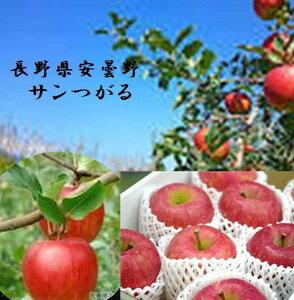 長野県 ゆたかな香りとさわやかで濃厚な甘み 「安曇野のサンつがる」進物用 1箱5kg(16〜20玉)