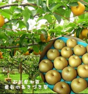 石川県産 奥谷梨出荷組合 奥谷のあきづき梨 1箱4.5kg(8玉〜13玉)