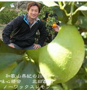 産地直送!!(国産)和歌山県紀の川市 味心部会 ノーワックス国産レモン 業務用 1箱(5kg)30玉〜50玉 ※大きさにより内容量が異なります。目立つスレ果・シミなどございます。