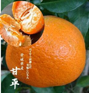(愛媛ブランド)愛媛県産 バイヤーが選んだ美味しいもん 「甘平」お試しセット 1箱1.5kg(3L〜M寸混合)