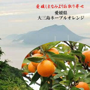 お取り寄せ!!愛媛県 大三島ネーブルオレンジ 3〜4L寸1箱(4.5kg)